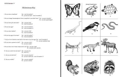 Ideas Of Dichotomous Key Worksheets With Letter Template