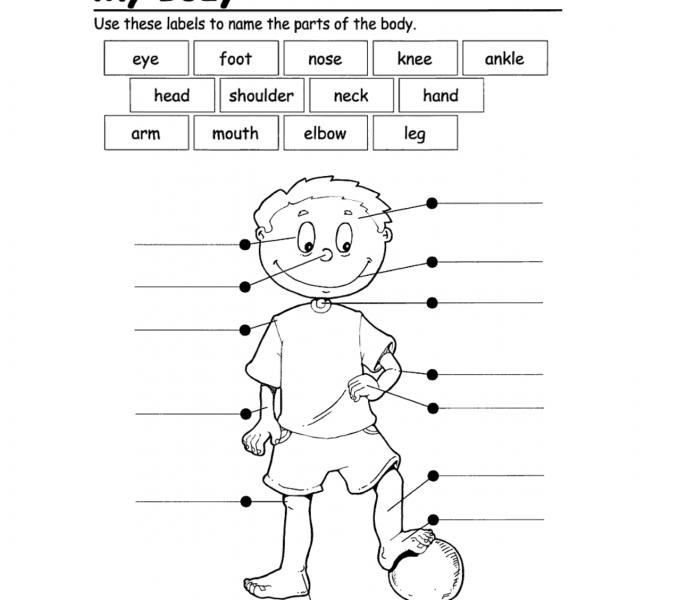Kindergarten Worksheet Body Parts 502129