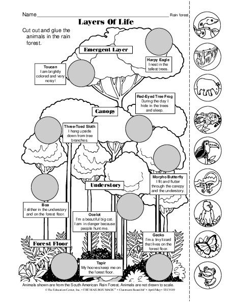 Layers Of The Rainforest Worksheet The Best Worksheets Image