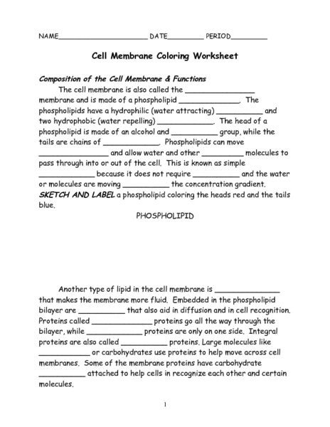 Membrane Structure And Function Worksheet Cell Membrane Structure