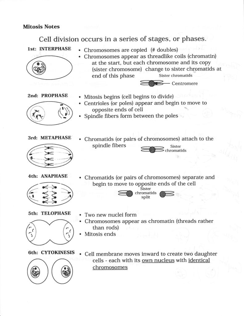 Mitosis Notes Worksheet