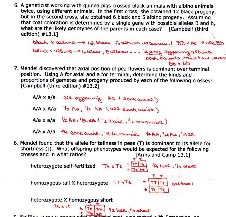 Multiple Alleles Blood Type Worksheet Answers Unique In Plete And
