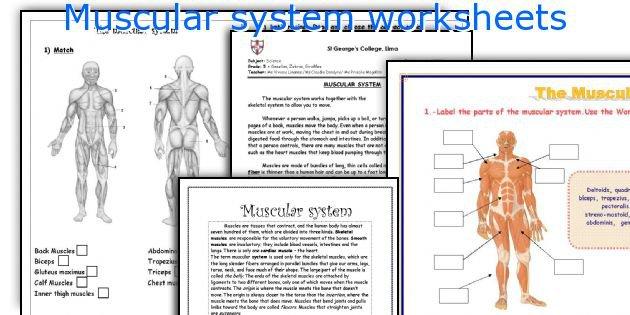 Muscular_system_worksheets Jpg