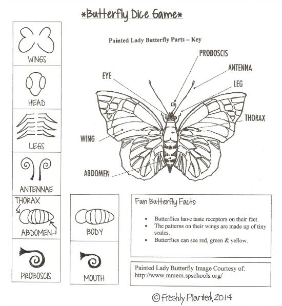 Parts Of A Butterfly Printable Dice Game