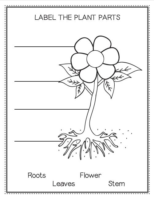 Parts Of A Plant Worksheet Kindergarten
