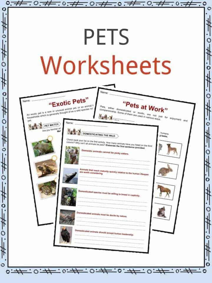 Pet Care Worksheets Kindergarten 496057