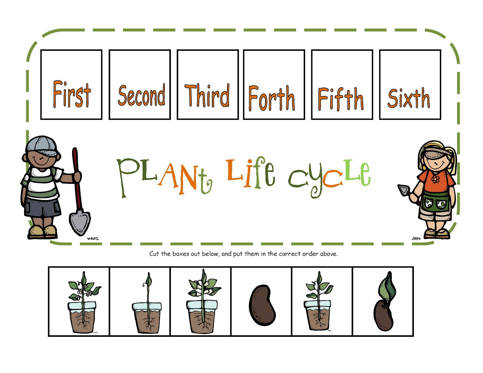 Plant Cycle Worksheets 401448