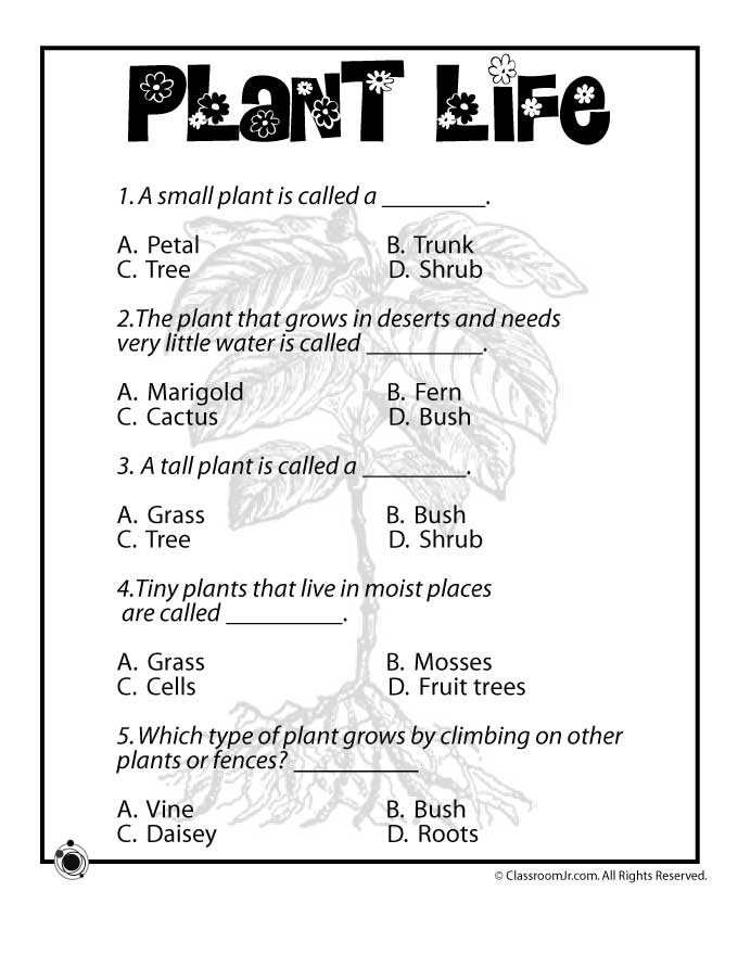 Plant Worksheets For 2nd Grade Choice Image