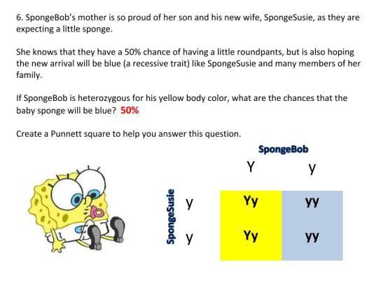 Practice Punnett Squares With Spongebob & The Gang