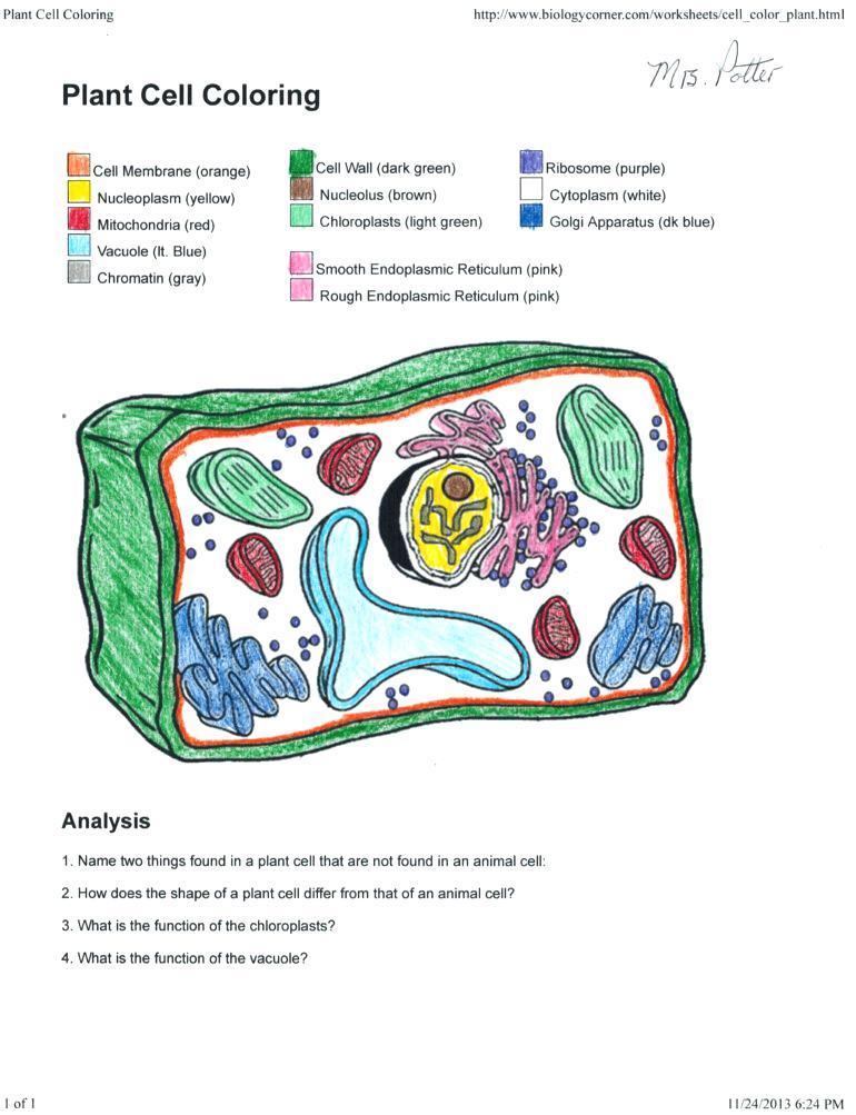 Prokaryote Coloring Sheet Answers 18656 Messiahapp Com Printable