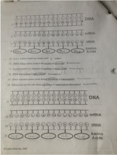 Protein Synthesis Worksheet Answer Key Protein Synthesis Worksheet