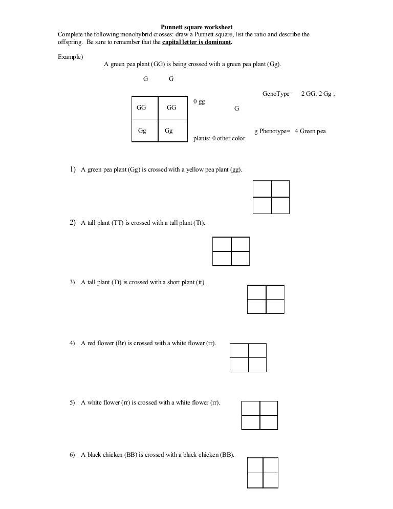 Punnett Square Practice Worksheet Answer Key Punnett Square