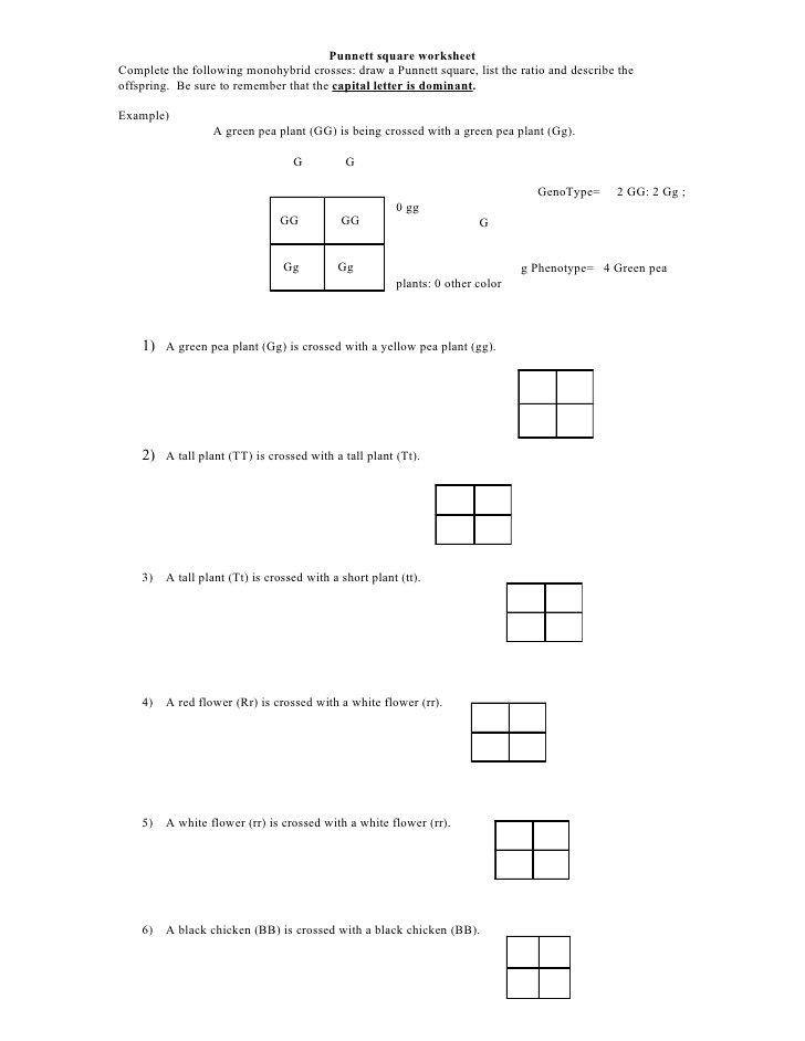 Punnett Square Practice Worksheet Answers Punnett Square Practice