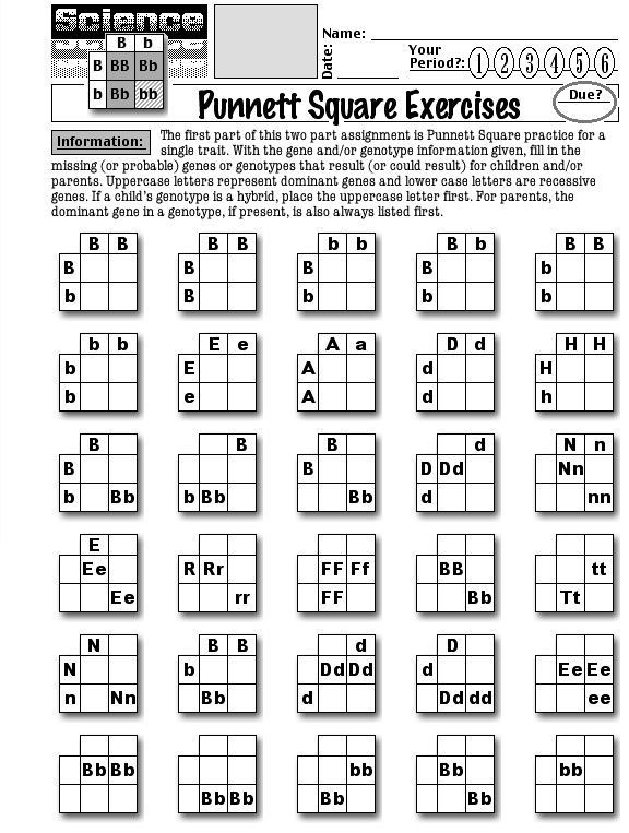 Pun t Square Worksheets Answer Key further Pun t Square Practice Worksheet With Answers 31 Best Awesome further Pun t Square Practice Worksheet Answers Sys Science Spot furthermore  furthermore  further worksheet ideas   pun t square problemsheet freeheets liry additionally  furthermore Pun t Square Worksheets Homedressage     wiring design further  as well Inheritance Activities  Ge ics Terminology and Pun t Squares by in addition Pun t Square Practice Worksheet 2 Answers Worksheets Problems The besides Pun t Square Practice Worksheets Answer Key together with  furthermore Pun t Square Practice Answer Key together with Free Worksheets Liry   Download and Print Worksheets   Free on furthermore Pun t Square Yy X Yy Archives   Wp landingpages   Pun t Square. on punnett square practice worksheet answers