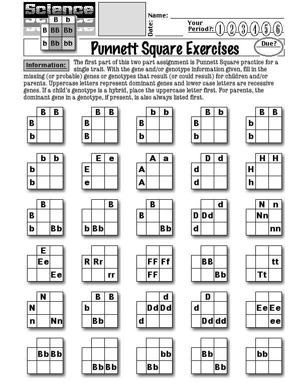Punnett Square Practice Worksheet Worksheets About Punnett Squares