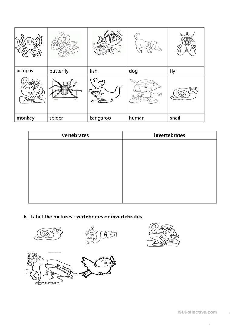 Sample Worksheet About Vertebrates And Invertebrates