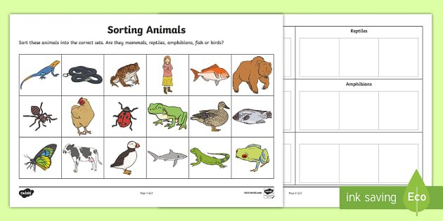 Sorting Animals Into Sets Worksheet