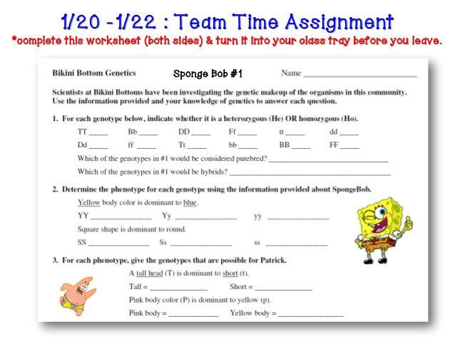 Spongebob Punnett Square Worksheet The Best Worksheets Image
