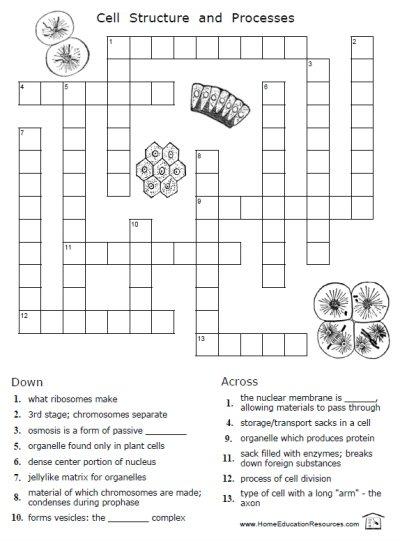 Useful Cellular Biology Worksheets Also Worksheet Cell Free