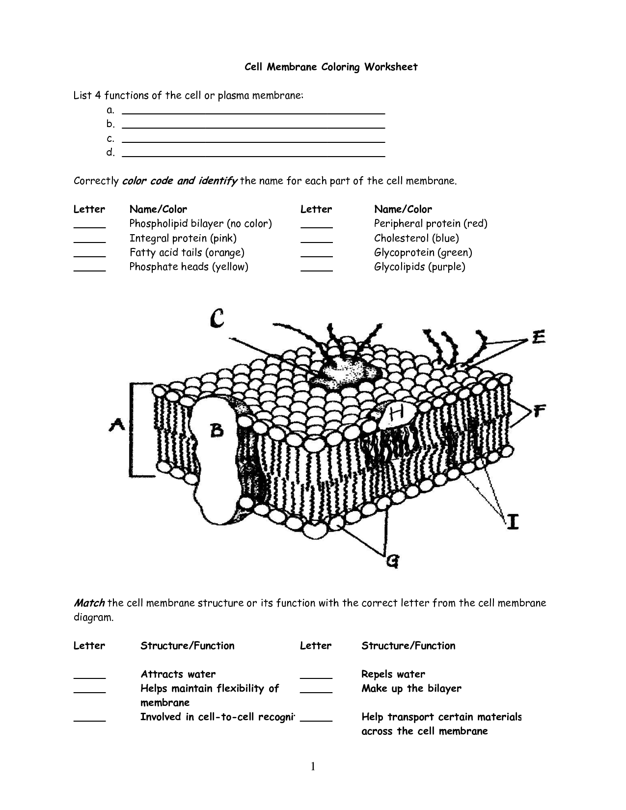 What Is A Cell Membrane And Transport Worksheet Plant