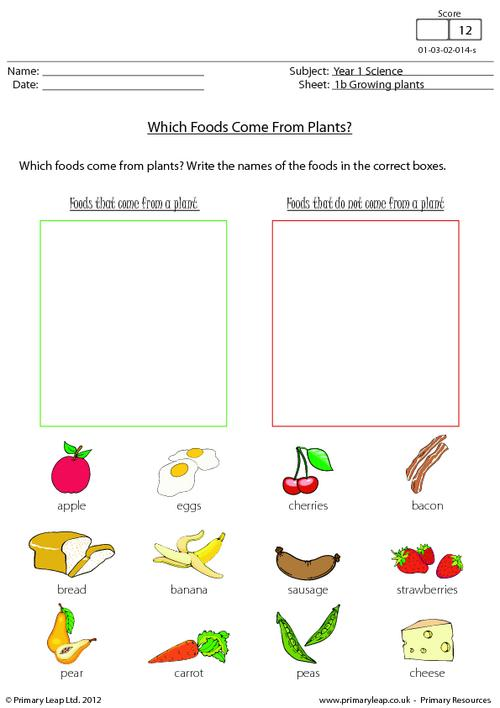 Which Foods Come From Plants