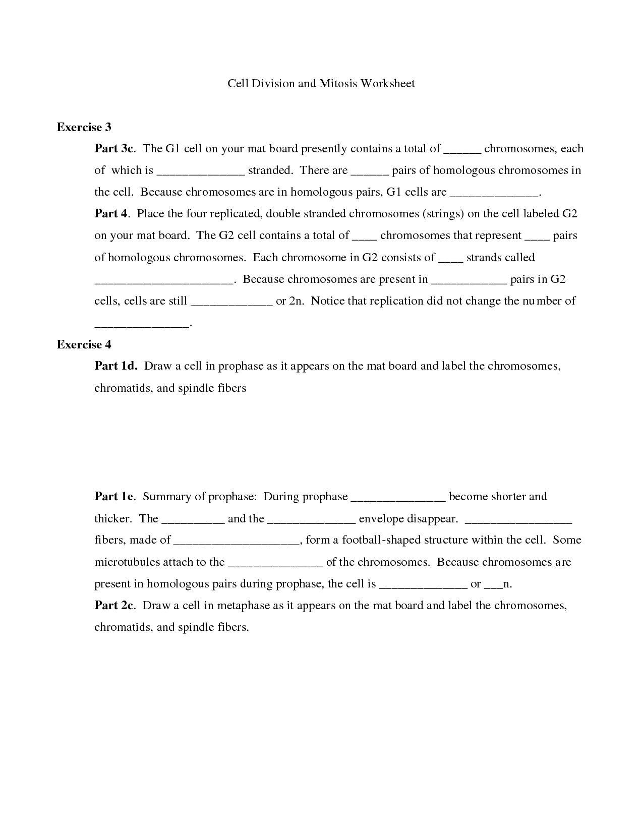 Worksheet Cell Division