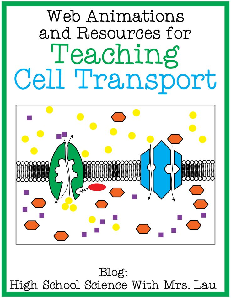 Worksheets 50 Unique Cell Membrane Coloring Worksheet Answer Key
