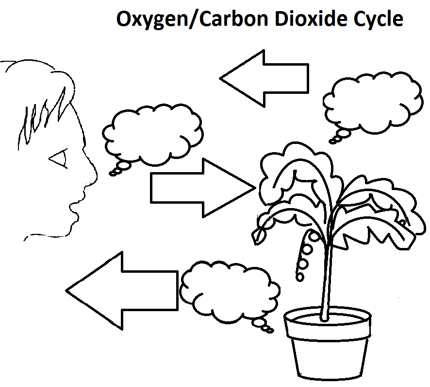 31 The Carbon Cycle Worksheet, Pics Photos The Carbon Cycle