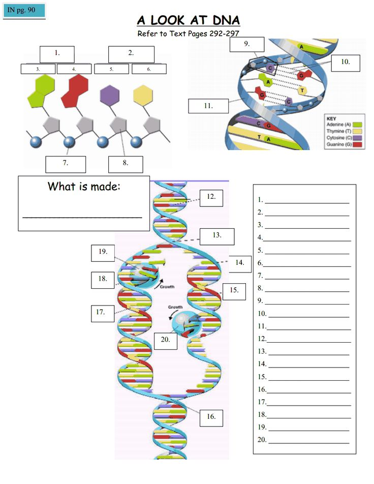 37 Best Of Dna Lesson Plans For Elementary Students