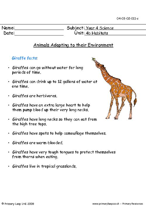 Animal Adaptations For Kids Worksheets The Best Worksheets Image