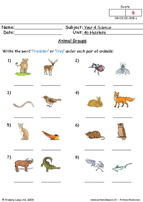 Animal Adaptations For Kids Worksheets Worksheets For All
