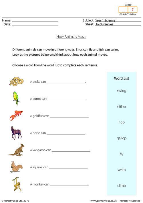 Animal Movement Worksheets For Kindergarten 429191