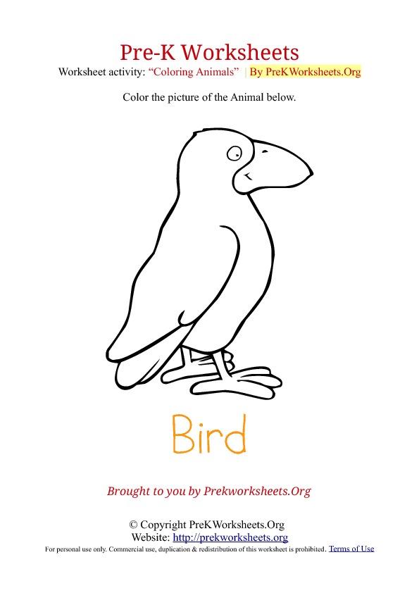 Birds Worksheets For Preschool 792075