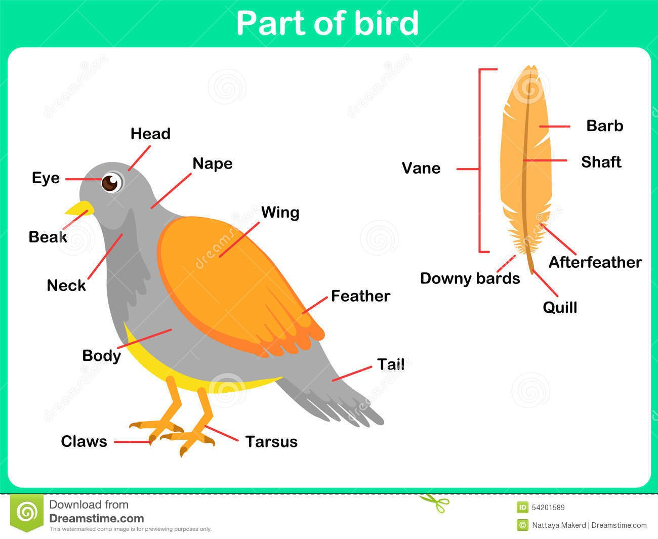 Body Parts Of A Bird Worksheets