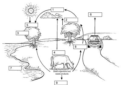 Carbon Dioxide Oxygen Cycle Worksheet Termolak, The Carbon Cycle