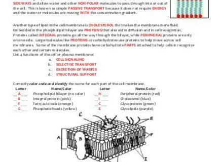 Cell Membrane Coloring Worksheet Answer Key Cell Membrane Coloring