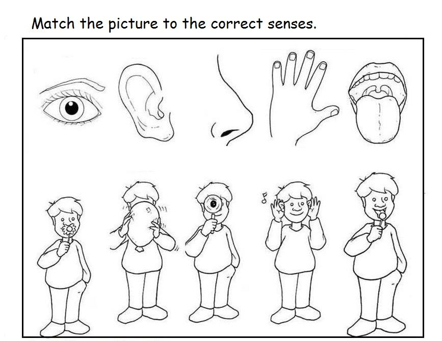 Collection Of 5 Senses Worksheets For Preschool