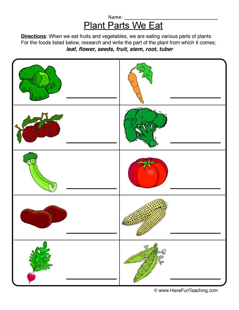 Collection Of Worksheets For Kindergarten On Plants Parts