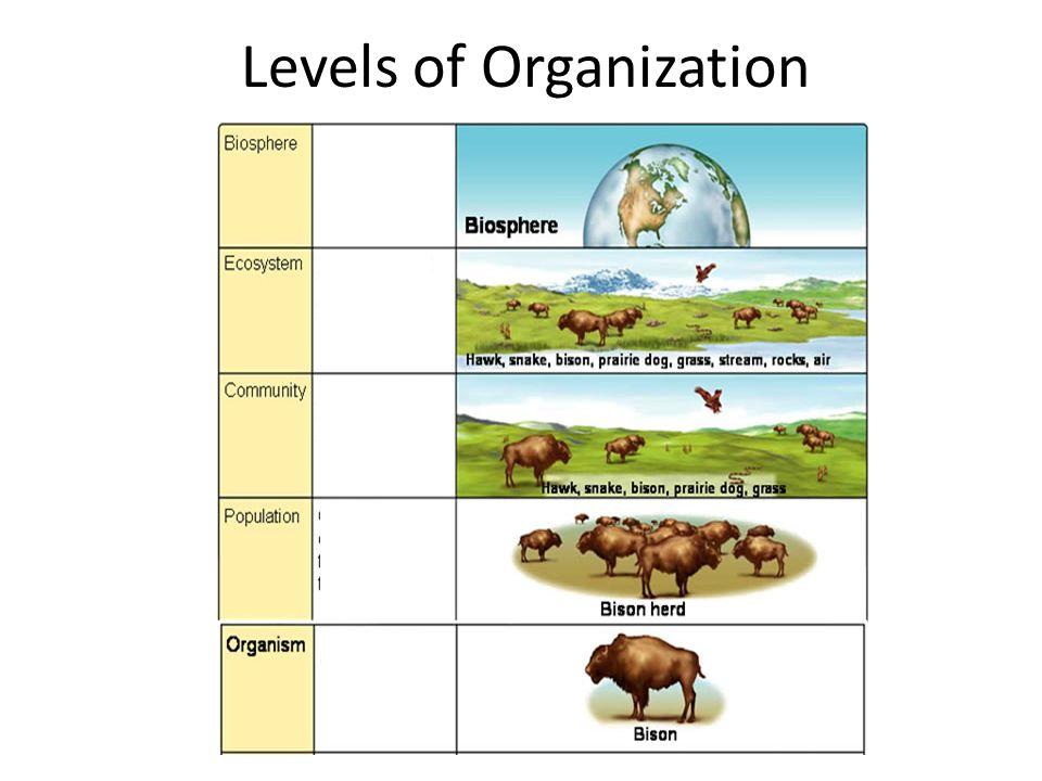 Ecology Levels Of Organization Worksheet The Best Worksheets Image