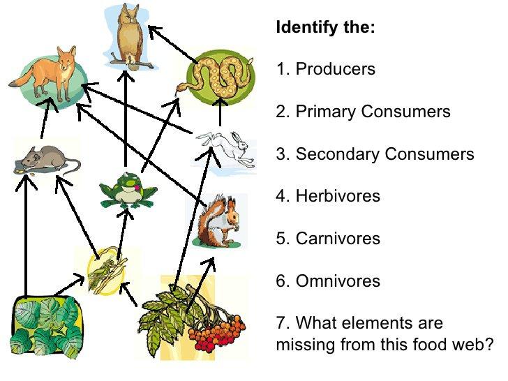 Ecosystem Worksheets 4th Grade