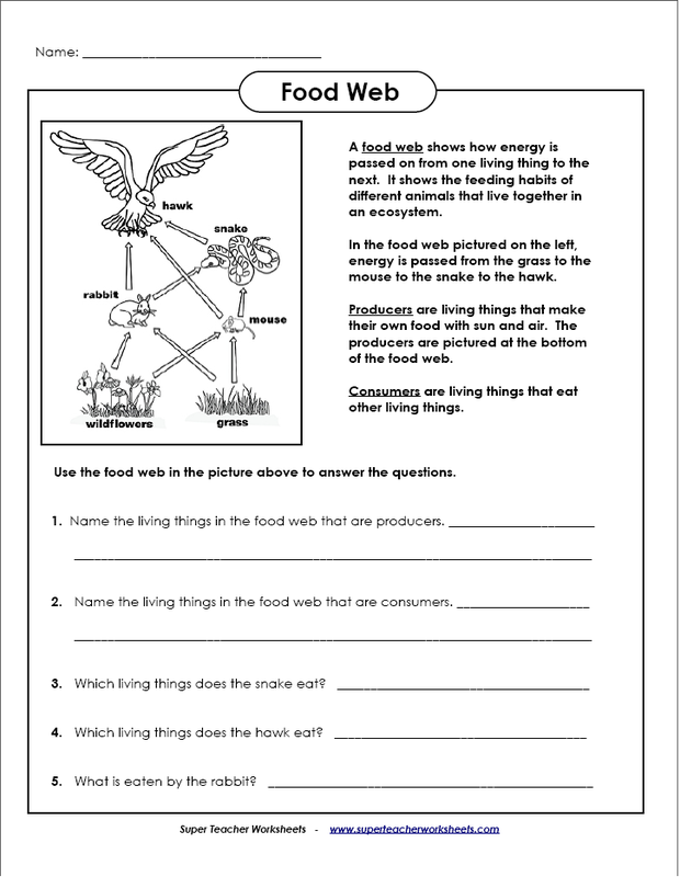 Food Chains And Webs Worksheet 636675
