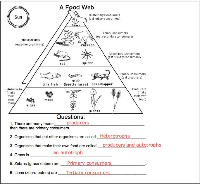 Food Web Worksheets Answers