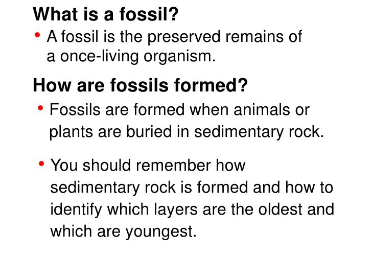 Fossil Worksheets For 4th Grade