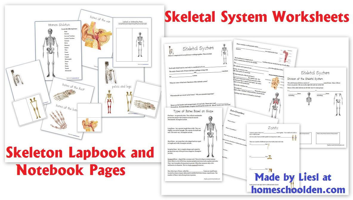 Joints Worksheet Year 3 424175