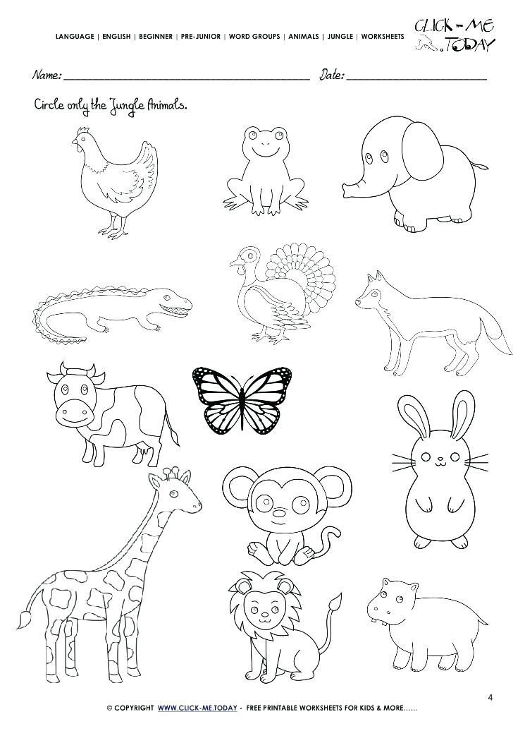 Jungle Animals Worksheets For Preschoolers 546492