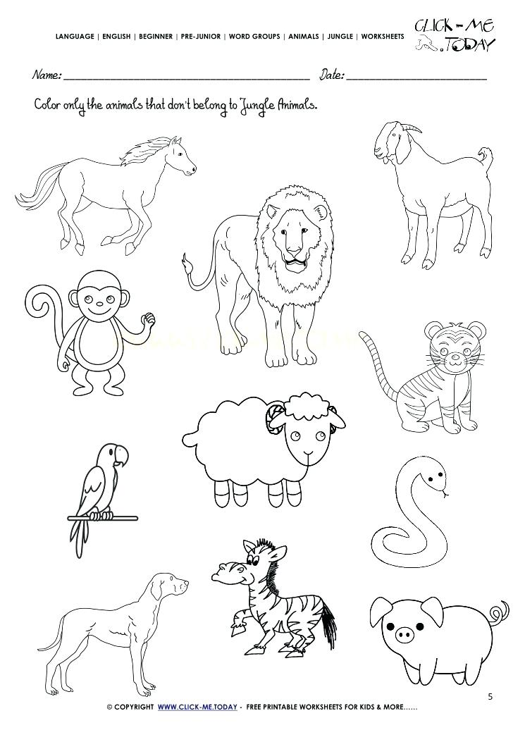 Jungle Animals Worksheets For Preschoolers 546496