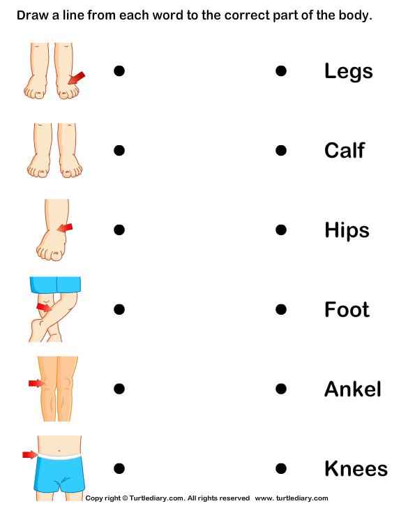 Kindergarten Worksheets On Parts Of The Body 24150