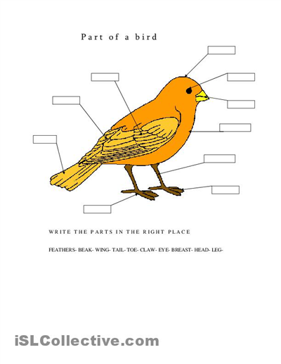 Label Parts Of A Bird Worksheets