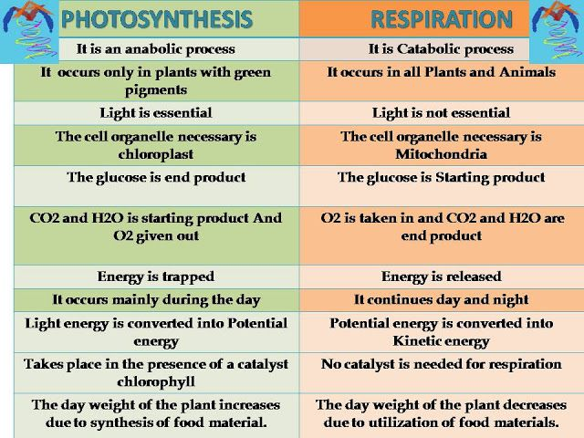 Microamaze  Photosynthesis Vs Respiration