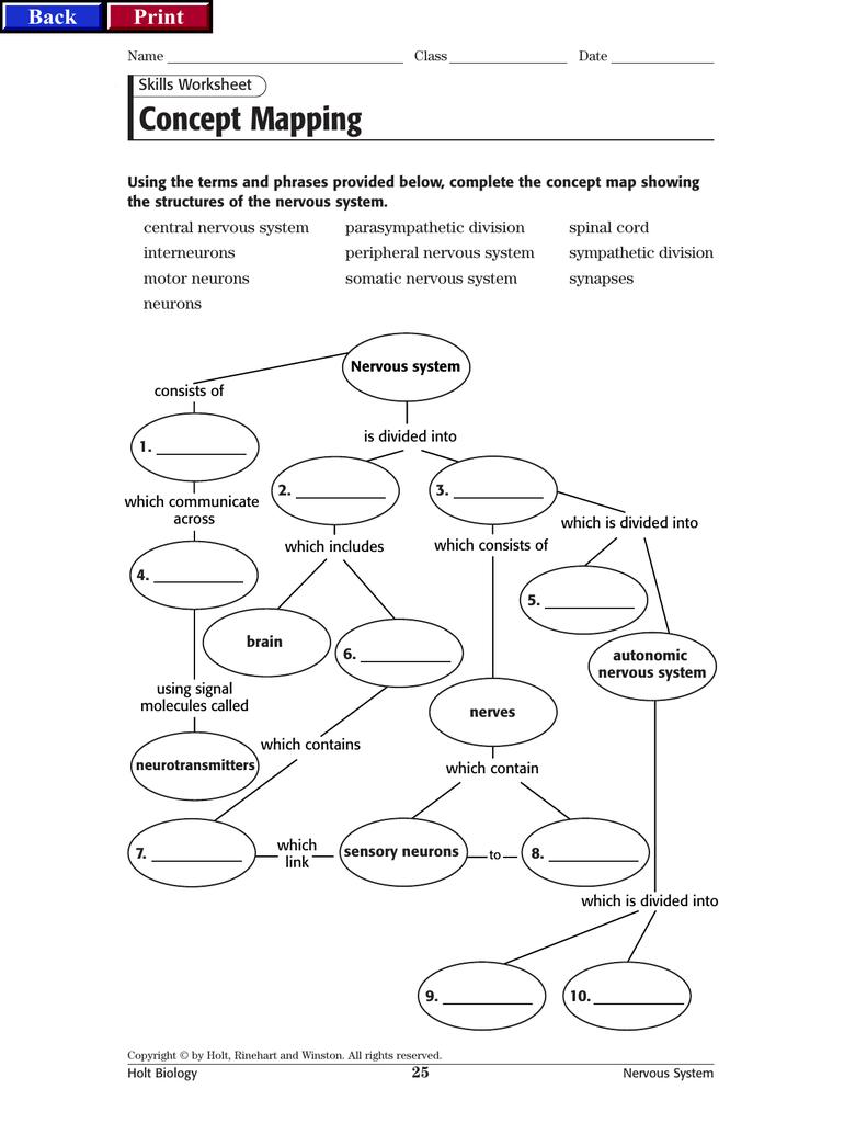 Nervous System Worksheet Answer Key 273720